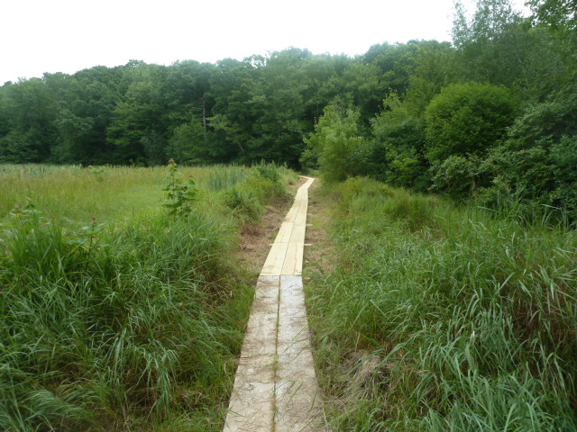 1-Boardwalk between marshes