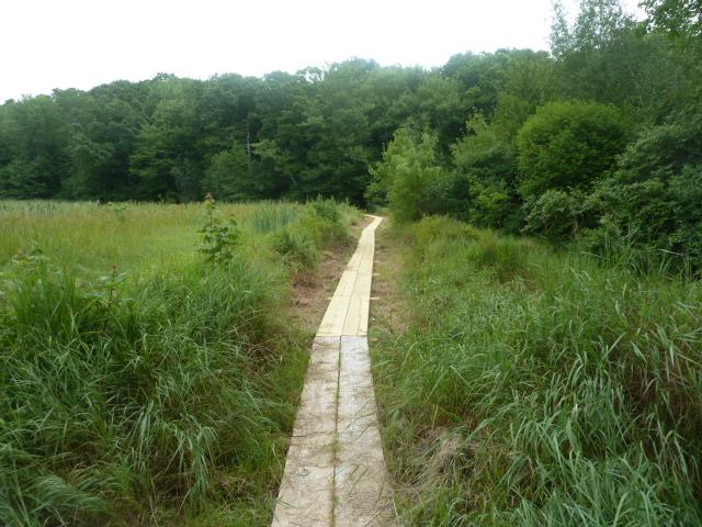 1-Boardwalk between marshes