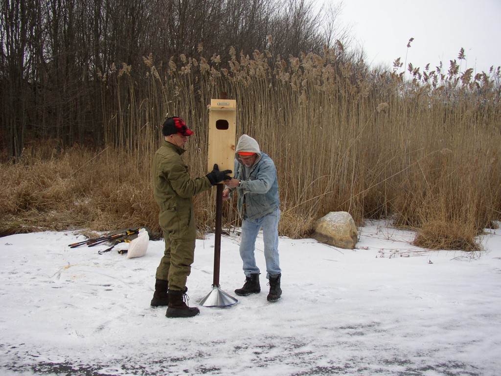 Gary Griffin and Eric Rahn installing the wood duck nesting box.