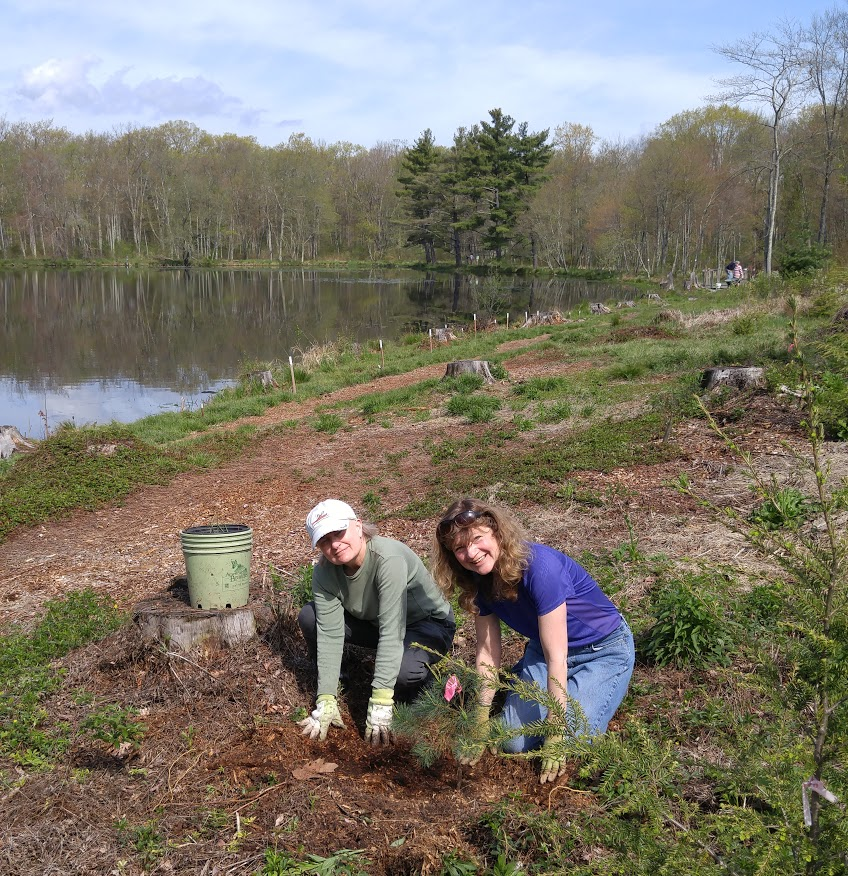 2016 spring work day pine trees planting